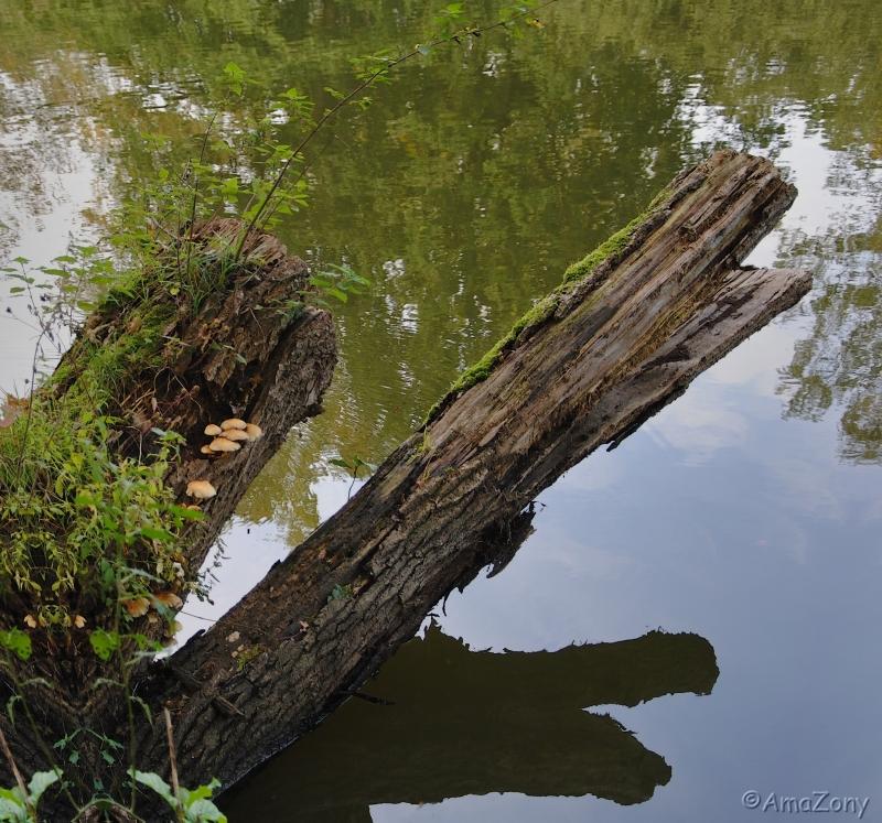 krokodil0130-ama.jpg
