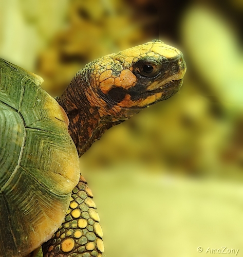 natuur,dieren,schildpad,Berkenhof,groen