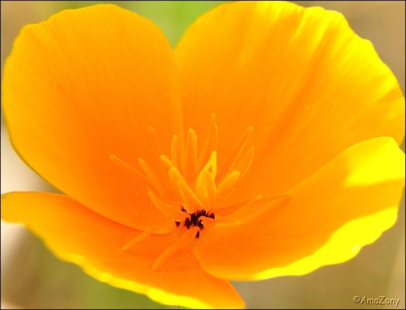 insekt,natuur,bij,herfst,nazomer,groen,bruin,bloemen,geel,