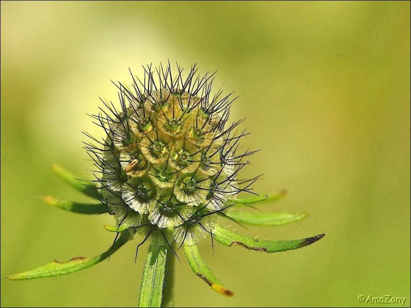 pajottenland,Gaasbeek,insekten,soldaatje,rode weekschildkever,onkruid,planten,bloemen,echinacea,natuur,