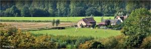 pajottenland,gaasbeek,insekten,soldaatje,rode weekschildkever,onkruid,planten,bloemen,koe,landschap,echinacea,natuur