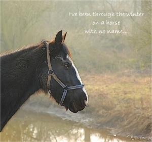 muskuseend,zwemvogel,slak,spreuk,paard,horse with no name,
