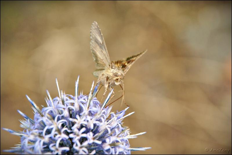 sprinkhaan,krasser,vlinder,uiltje,lieveheersbeestje,slak,naaktslak,wesp,bij,stippels,insekten,natuur