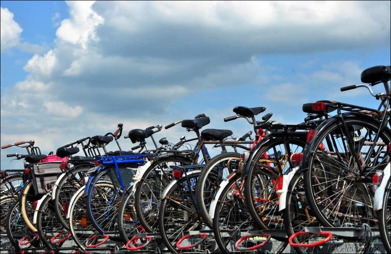 spring maar achterop,fiets,Amsterdam,Middelheimpark,Antwerpen,fietsen,velo,Kortrijk,fotografie