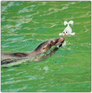 Seel,Pokemon,zeehond,fotografie,Keulen Zoo