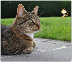 meowth,kat,pokemon,malou,fotografie,huisdier