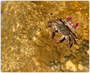 Krabby,krab,Pokémon,zee,strand,kust,fotografie,animatie,Kroatie