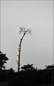hanging tree,jennifer lawrence,the hunger games,mockingjay,fotografie,bomen,kalmthoutse heide,muziek,film