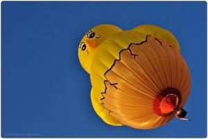 ballon,vredefeesten,st niklaas,geel,kuiken,fotografie