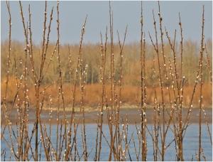 boer Bavo,Miel Cools,katjes,natuur,Buitenland,winter